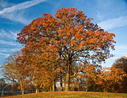 Ashe Photos - Fall Post Oak by Melinda Fawver