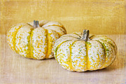 Terry Ellis - Fall Pumpkins