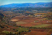 Wine Country. Originals - Fall Quilted Vineyards by Kathy Sidjakov