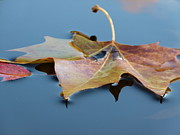 Autumn Leaf On Water Photos - Fall Reflections by Jane Ford