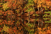 Colors Of Autumn Photo Posters - Fall Reflections Poster by Karol  Livote