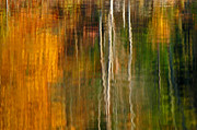 Olivia Hardwicke - Fall Reflections