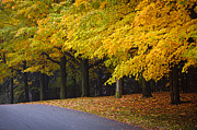 Yellow Line Framed Prints - Fall road and trees Framed Print by Elena Elisseeva