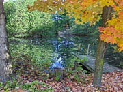Fallen Leafs Photos - Fall Scene by Pond by Brenda Brown