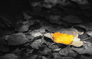 Black And Yellow Art - Fall by Scott Norris