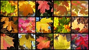 Impressionism Acrylic Prints Photos - Fall series 33 by France Laliberte