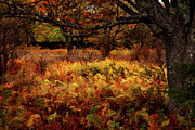 Autumn Prints Posters - Fall Shadows - Dolly Sods West Virginia Poster by Dan Carmichael
