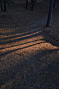 Pine Needles Photo Originals - Fall Shadows by Randal Bruck