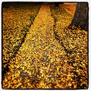 Fall Leaves Photo Originals - Fall Sidewalk by Jeff Klingler