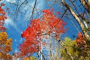 Fall Sky Print by Patrick Shupert