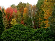Gail Matthews - Fall Splashes of Color