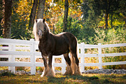 Horse Photos Framed Prints - Fall Splendor Framed Print by Laurie Comfort