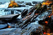 Zach Edlund Prints - Fall Stream Print by Zach Edlund