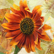 Robin Dickinson - Fall Sunflower