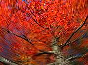 Tree Bark Photos - Fall Tree Carousel by Juergen Roth