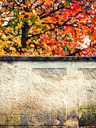 Silvia Ganora - Fall tree with wall