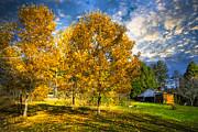 Debra and Dave Vanderlaan - Fall Trees at the Farm