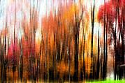 Fall Trees Of Bucks County Print by Tom Gari Gallery-Three-Photography