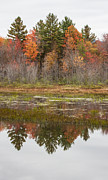 Fall Trees Reflected In Lake Chocorua Print by Karen Stephenson