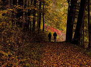 Autumn Woods Posters - Fall Walk Poster by Tom Griffithe