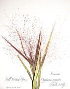 Roberta Jean Smith - Fall Witch Grass
