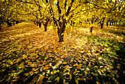 Kevin Felts - Fall Yellow in the...