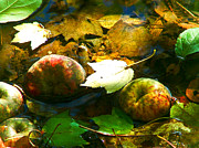 Flood Art Photo Prints - Fallen Apples Print by Jt PhotoDesign