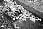 Blocking Prints - fallen autumn leaves blocking storm water run off drain Vancouver BC Canada Print by Joe Fox
