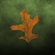 Earth Tone Photo Prints - FALLEN Brown and Green Leaf Print by Jai Johnson