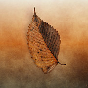 Earth Tone Photo Prints - FALLEN Brown Leaf Print by Jai Johnson