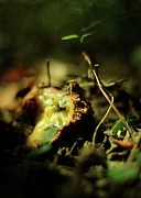 Forest Floor Photos - Fallen Fruit by Rebecca Sherman