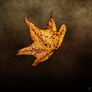 Earth Tone Photo Prints - FALLEN Golden Leaf Print by Jai Johnson