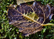 Fallen Leaf 2 Print by Greg Jackson