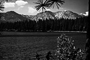 Fallen Leaf Photo Posters - Fallen Leaf Lake bw Poster by Cheryl Young