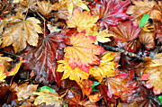 Fallen Leaf Posters - Fallen Leaves Poster by Bev  Brown