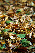 Red Fallen Leave Photo Posters - Fallen Leaves Poster by Carlos Caetano