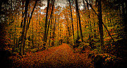 Fir Trees Photos - Fallen Leaves by David Patterson