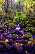 Creeks Prints - Fallen Leaves On The Rocks Print by Jeff  Swan