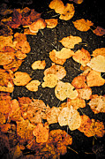 Fallen Leaves Print by Silvia Ganora