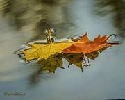 LeeAnn McLaneGoetz McLaneGoetzStudioLLCcom - Fallen Reflections