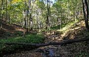 Kristin M Crist - Fallen Trail