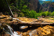 Mountains Photographs Framed Prints - Fallen Tree at Hanging Lake Framed Print by John Hoffman