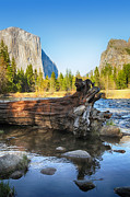Alpine Prints - Fallen tree in Merced river Print by Jane Rix