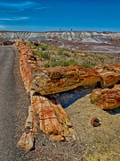 Petrified Forest Prints - Fallen Trees of Stone Print by Rob Wilson