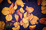 Asphalt Photos - Fallen yellow leaves by Silvia Ganora