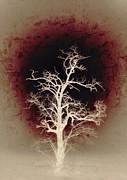 Falling Deeper... Print by Marianna Mills