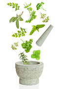 White Background Posters - Falling Herbs Poster by Christopher Elwell and Amanda Haselock