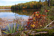 Sandra Updyke - Falling Leaves #1