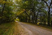 Country Dirt Roads Photos - Falling Leaves by Garett Gabriel