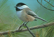 Black-capped Chickadee Greeting Cards Prints - Falling Shadows Print by Mike Brown